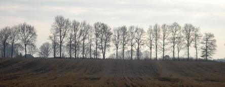 Bomen_4