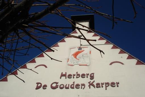 Gouden_karper