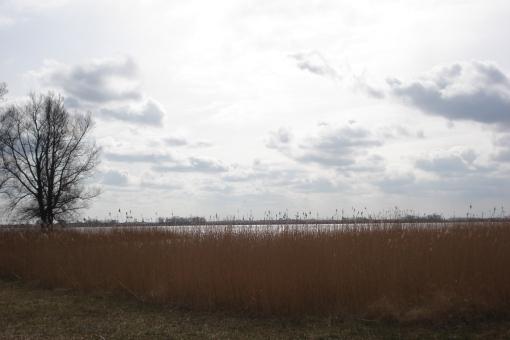 Giethoornschemeer